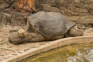 Lonesome George 1 by photoboy1002001