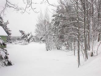 Backyard Winter by Jediferret