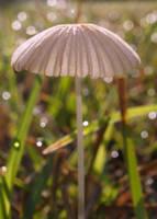fairy awning by snikkio