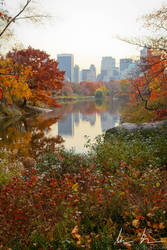View of the lake in Central Park, Looking Downtown by kaitou-ace