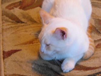 say hi to my new kitty by foolishbunny
