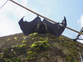 A Bat by shiny-person