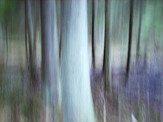 centre of tranquillity by skogsanda
