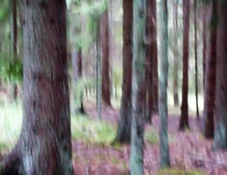 belonging by skogsanda