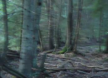 My love by skogsanda