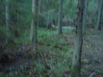 Personality by skogsanda