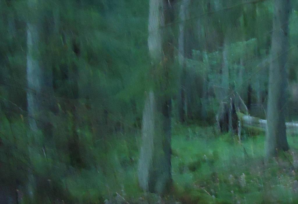 Bliss by skogsanda