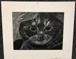 Kitty by DragonNoddles