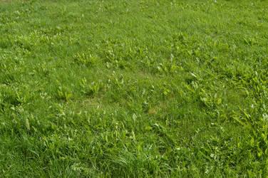Green Grass 2_by GalinaV by GalinaV