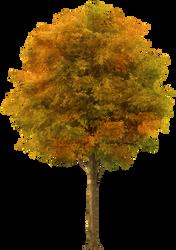 Autumn Tree_by GalinaV by GalinaV