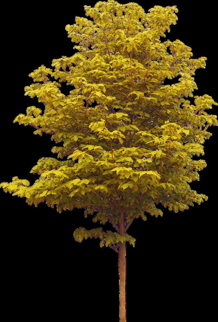 Autumn Tree (2)_by GalinaV by GalinaV