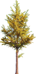 Autumn Tree (3)_by GalinaV by GalinaV