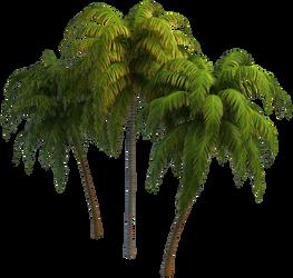Palm Trees_by GalinaV by GalinaV