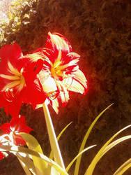 Red greens by oflird