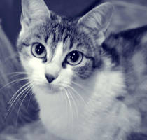 My cat by SickPuppyi