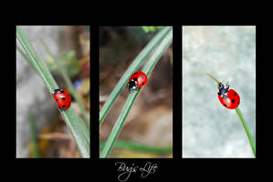 Bug's Life by Andrea-Deah