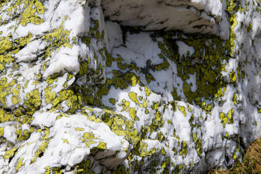 Map Lichen by ASimagined