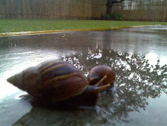 Snailz by cyberend