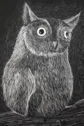 owl by amurrrr