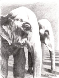 Elephants, Thailand by DragonTreasureArt