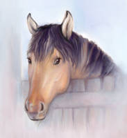 Equine portrait by Yullapa