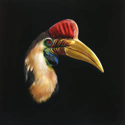 Red Knobbed Hornbill - Scratchboard by shonechacko