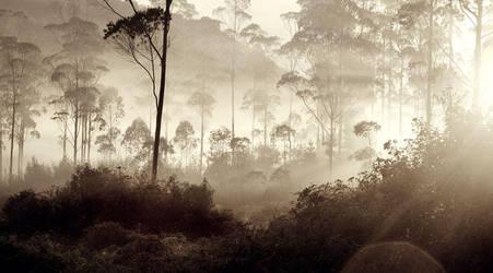 Forest by DonovanDennis