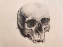 Human Skull by backhendl