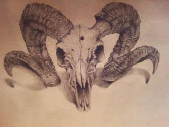 Ram Skull by backhendl