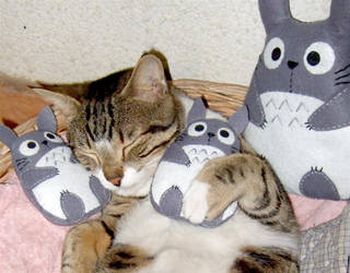 totoro loving kitty by yael360