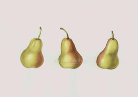 Three Pears by WildWoodArtsCo