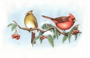 Cardinals by WildWoodArtsCo
