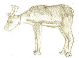 A reindeer. by Zeggolisko