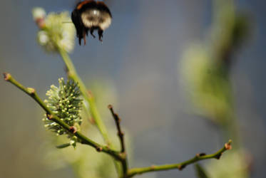 Bumblebee 3 by Jakobia