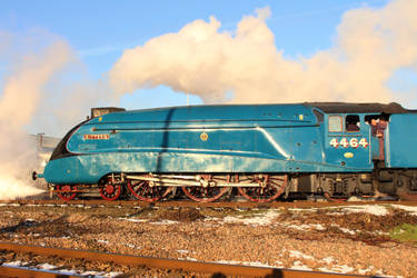 Garter Blue by 2509-Silverlink
