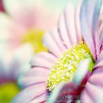 sweet summer garden by TrishaMonsterr