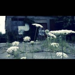 weeds by TrishaMonsterr