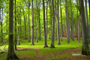 Sherwood Forest by ckaj