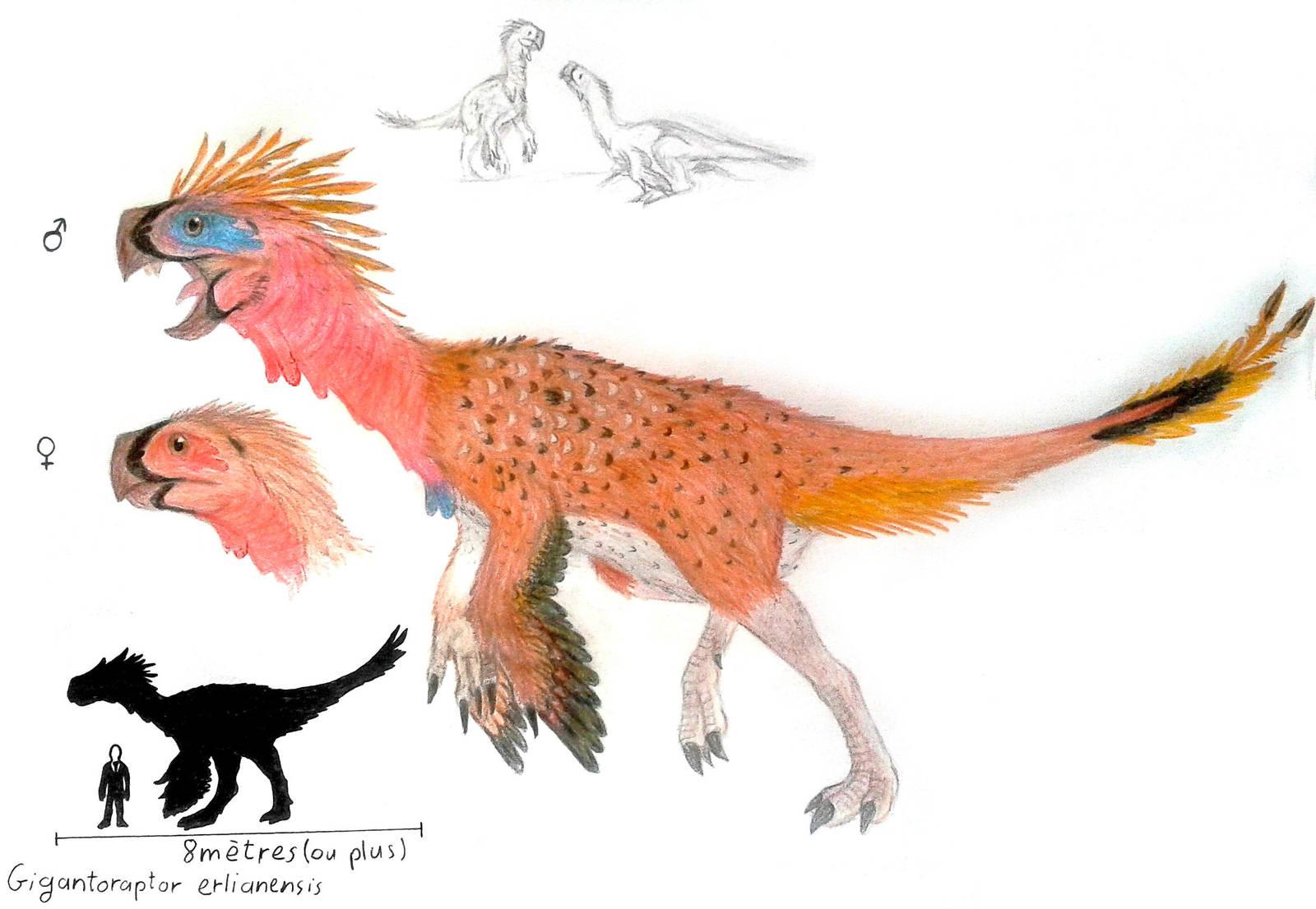 Gigantoraptor erlianensis by ZeWqt