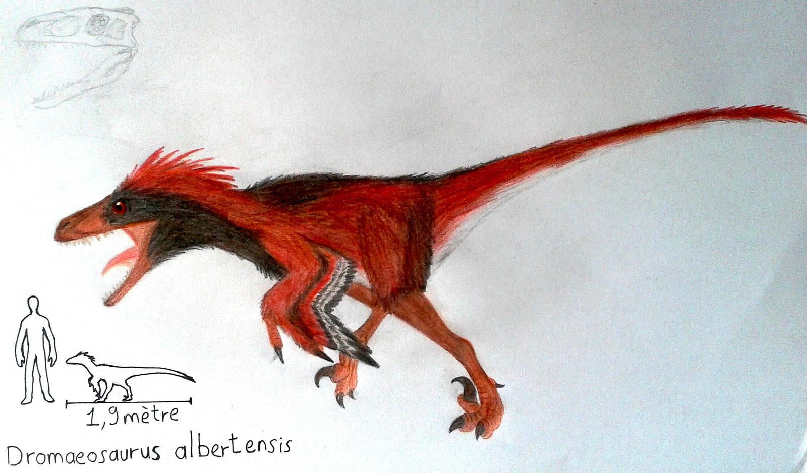 Dromaeosaurus albertensis by ZeWqt