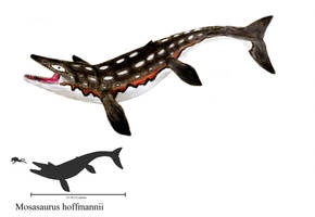 Mosasaurus hoffmannii by ZeWqt