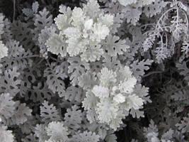 Monochrome Ferns II by MaurogDark