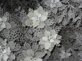 Monochrome Ferns III by MaurogDark