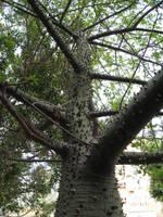 Spiky Tree by MaurogDark