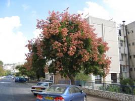 Blooming Tree by MaurogDark