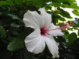 White Flower II by MaurogDark