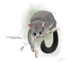Common Brushtail Possum by Jish-G