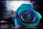 the rose by tazwaraz