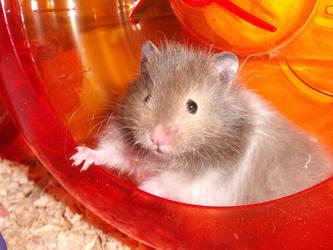Sweet Hamster by specialoftheweek