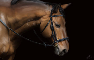 Semi-realistic horse portrait by Novazure
